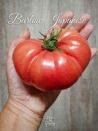 44-barlow-jap0