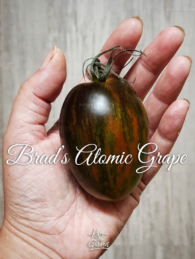50-brads-atomic-grape0